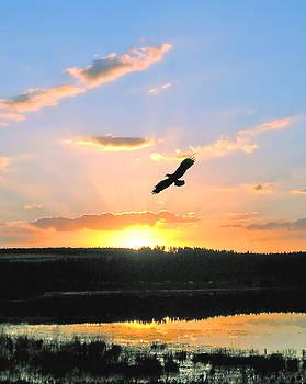 Eagle Flight by Adele Moscaritolo