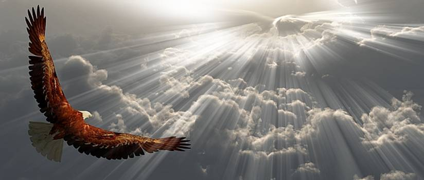 Eagle in flight above the clouds by Bruce Rolff