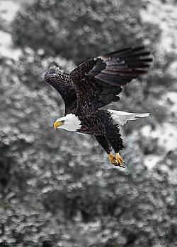 Eagle in Flight by Britt Runyon