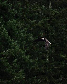 Eagle In His Flight - Birds of Prey Art by Jordan Blackstone