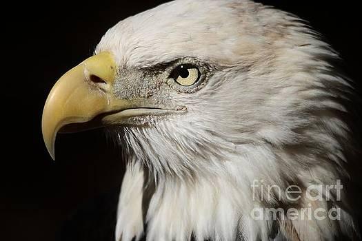 Paulette Thomas - Eagle Intense Stare
