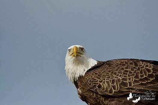 Eagle Looking at Me by TJ Baccari