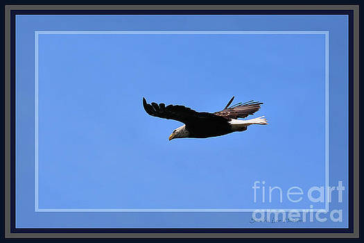 Sandra Huston - Eagle on the Prowl, Framed