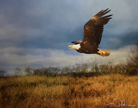 Eagle over the field by Gloria Anderson
