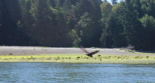 Eagle over water by Richard Jones