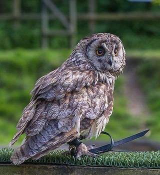 Dee Carpenter - Eagle Owl