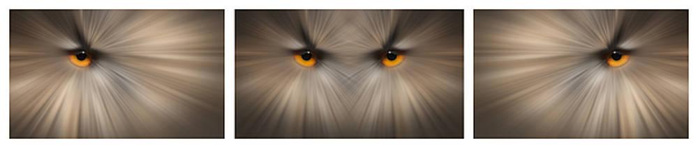 Eagle Owl Eye Triptych by Andy Astbury