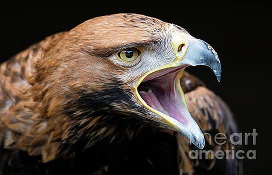 Eagle Power by Eyeshine Photography