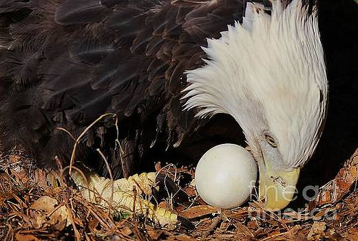 Paulette Thomas - Eagle Protecting Her Egg