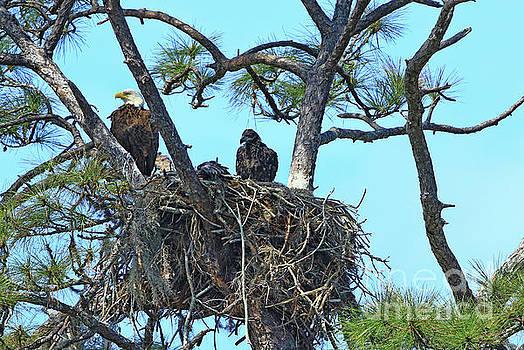 Eagle Series Baby by Deborah Benoit