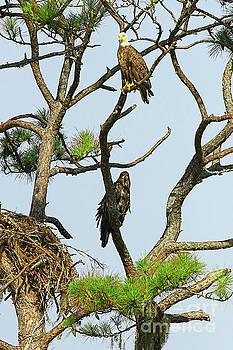 Eagle Series Mom and Me by Deborah Benoit