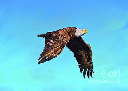 Eagle Series The Glide by Deborah Benoit