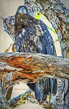 Eagle Series Tree Baby by Deborah Benoit