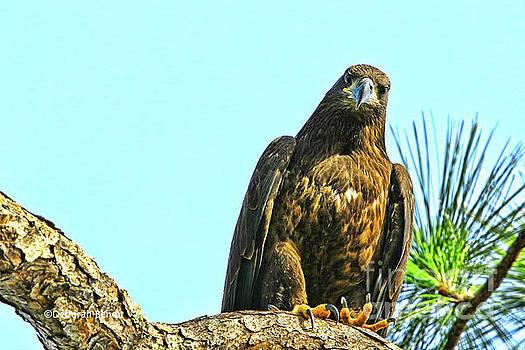 Eagle Series Here's Looking At You by Deborah Benoit