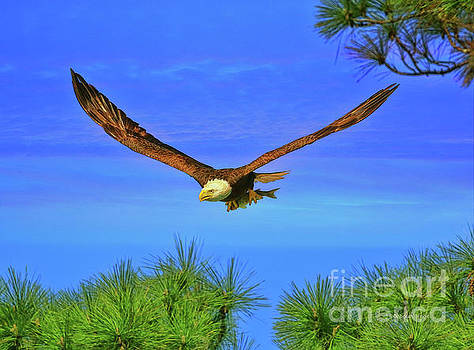 Eagle Series Through The Trees by Deborah Benoit