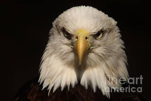 Paulette Thomas - Eagle Stare