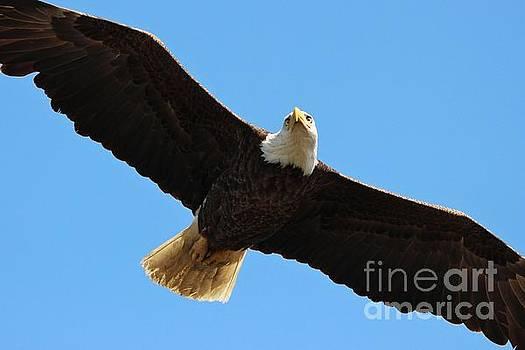Paulette Thomas - Eagle Up Close