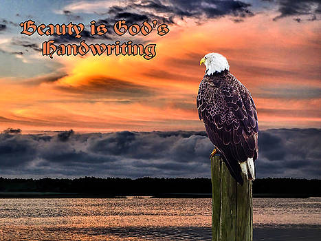 Eagle Watching Sunrise by Terry Shoemaker