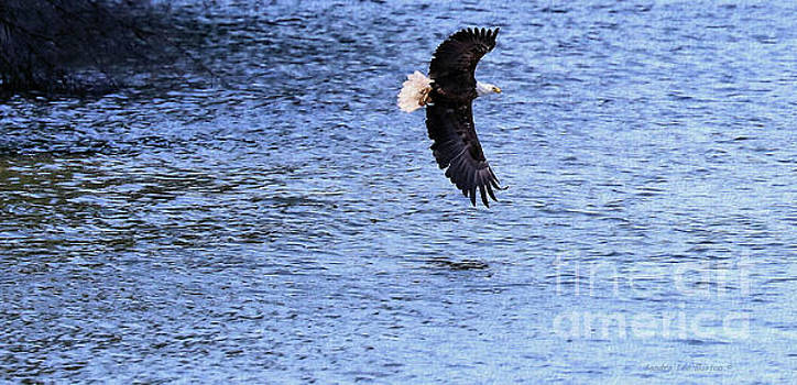 Sandra Huston - Eagles Catch Of The Day