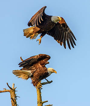 Eagles by Jerry Cahill