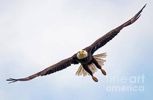 Eagle's Pursuit by Larry Nieland