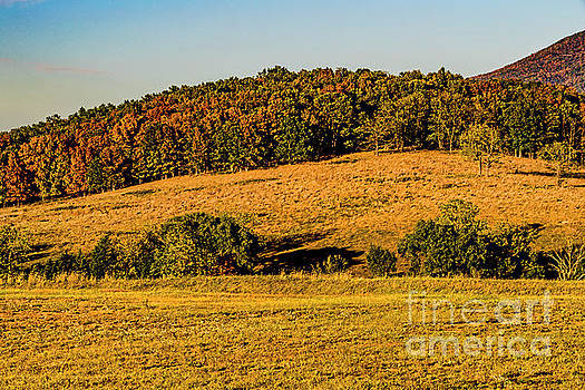 Early Autumn in the Mountains 1572T by Doug Berry