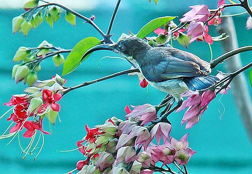 Early Bird by Ajithaa Edirimane