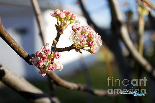 Early Buds of Spring2 by Jannice Walker