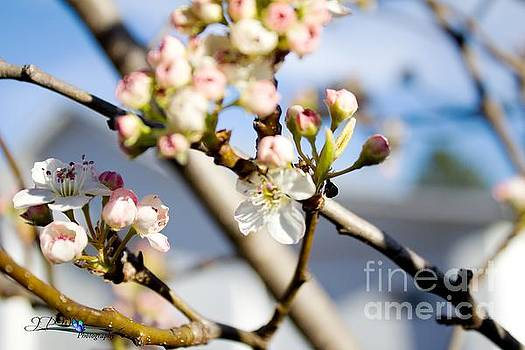 Early Buds of Spring3 by Jannice Walker