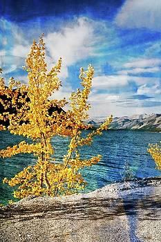 Early Fall by Marty Koch