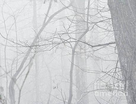 Early Fog  by JW Hanley