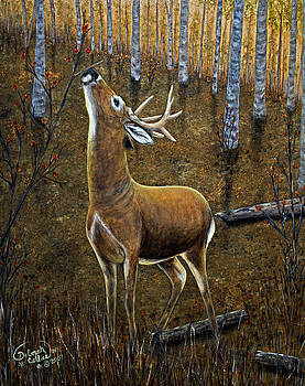 Early Morning Buck by Deborah Collier