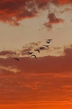 Edward Sobuta - Early Morning Flight