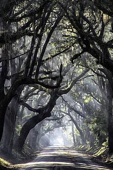 Bonnie Davidson - Early Morning Fog