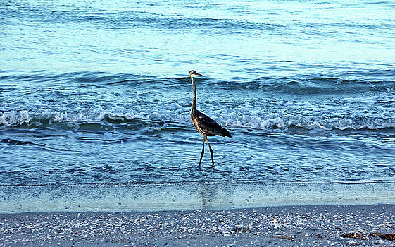Debbie Oppermann - Early Morning Heron Beach Walk I