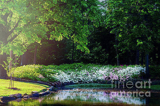 Early Morning Light at the Azalea Pond by Tamyra Ayles
