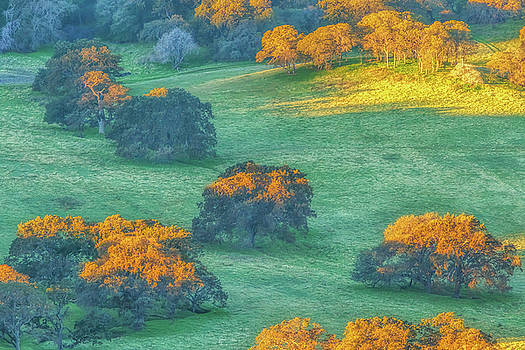 Early Morning Light on Tree Tops by Marc Crumpler