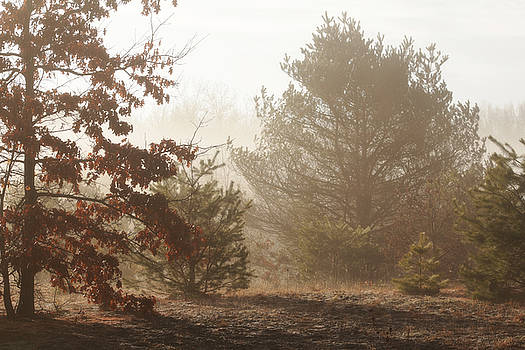 Early Morning Nature by Scott Hovind