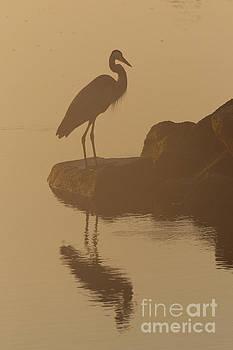 Early Morning River Heron by Rachel Morrison