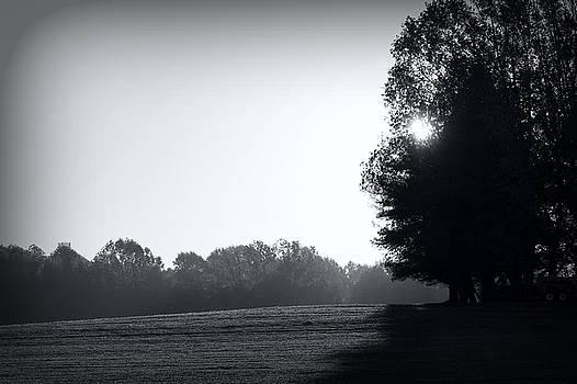 Early Morning by Sheryl Bergman