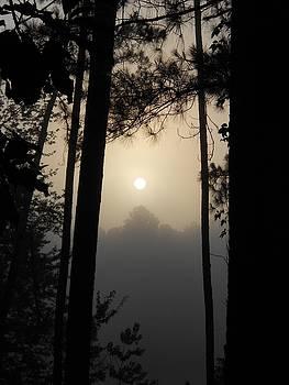 Early morning sun through the fog by Cindy Hudson