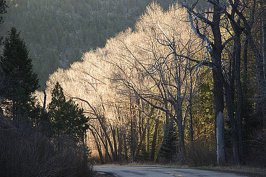 Early morning trees by Jim Wright