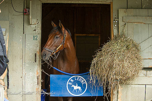 Early Morning Workout at Saratoga 22 by Michael Gallitelli
