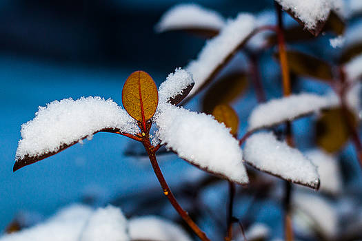 Early Snow by Connor Koehler