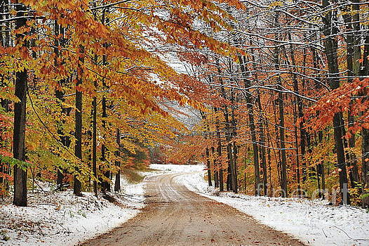Terri Gostola - Early Snowfall in Manistee National Forest