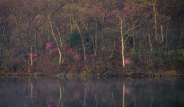 Jeff Phillippi - Early Spring Lake Shore