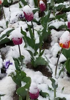 Early Spring, Late Snow by Jennifer Fliegel