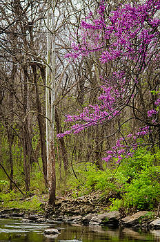 Jeff Phillippi - Early Spring on Mill Creek