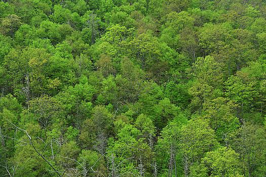 Raymond Salani III - Early Spring Trees in Maryland