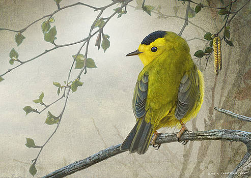 Early Spring Wilson's Warbler by R christopher Vest